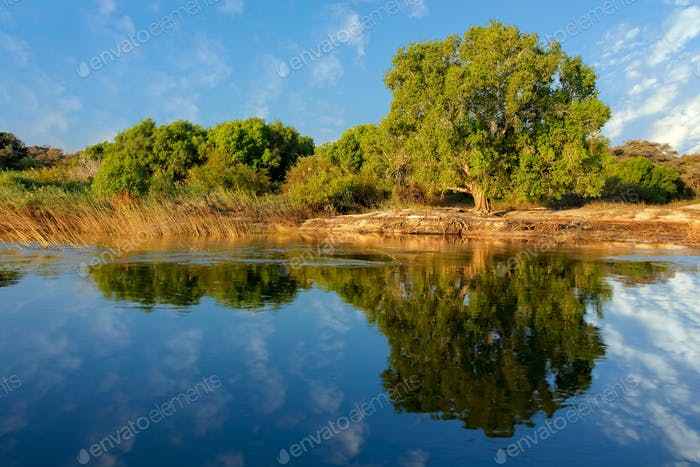Trees and reflection - Zambezi river