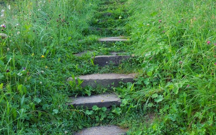 Treppen und Gras im Garten. Design Komposition