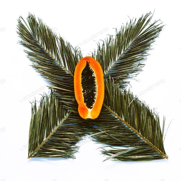 Palm leaves and papaya on white background. Minimal design art