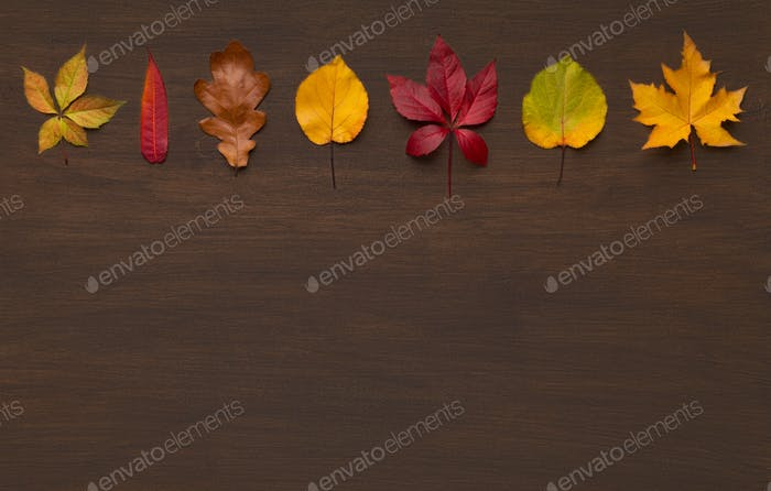 Autumn colorful line of dry leaves diversity
