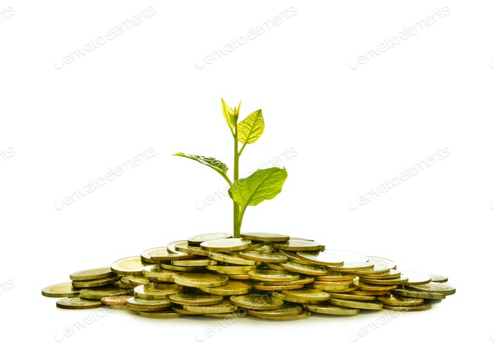 Pile of coins with plant on top