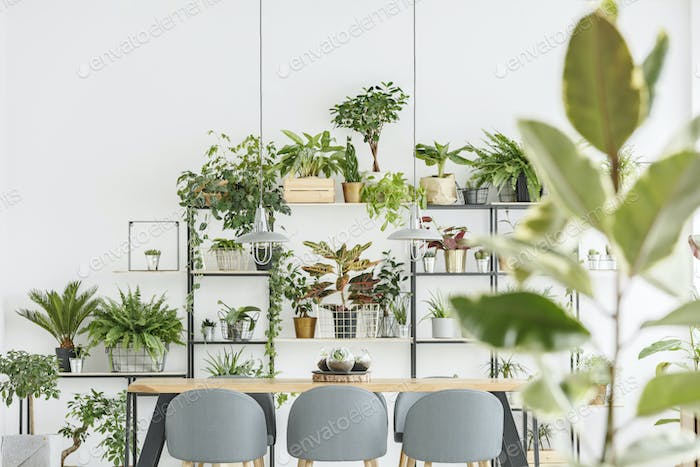 Plants in natural dining room