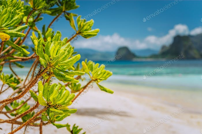 Tropical green beach plants foliage at Las cabanas beach with blurred Malpacao island in background