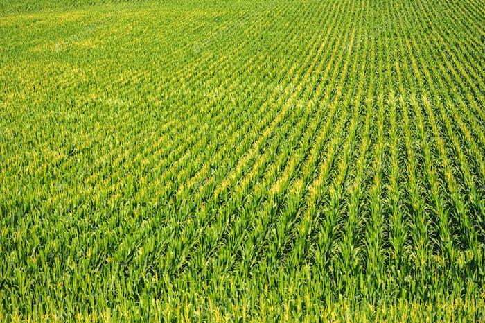 Agricultural Land Crops