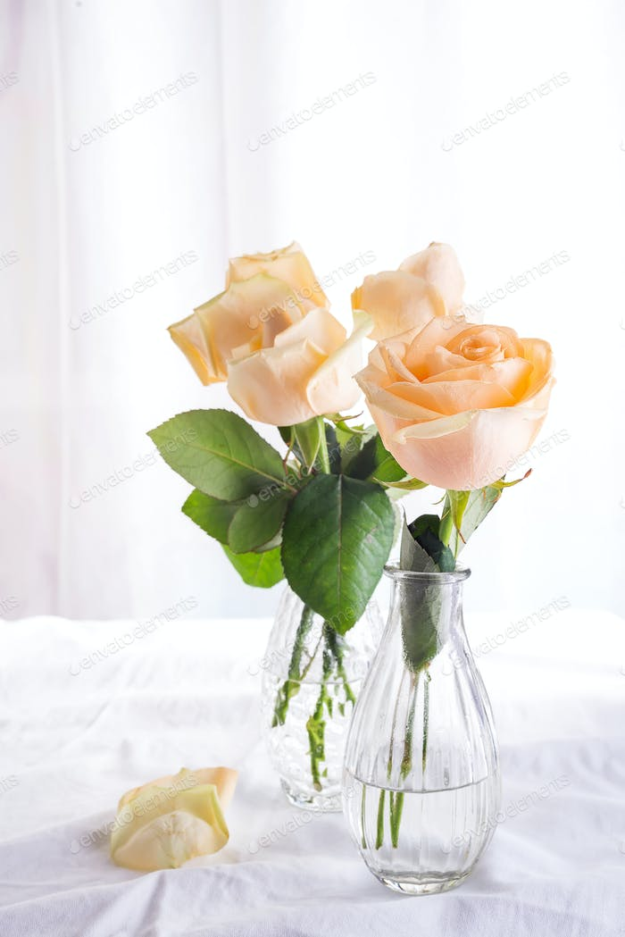 Beautiful fresh cut beige Roses in glass vase on light background. Minimal floral composition for