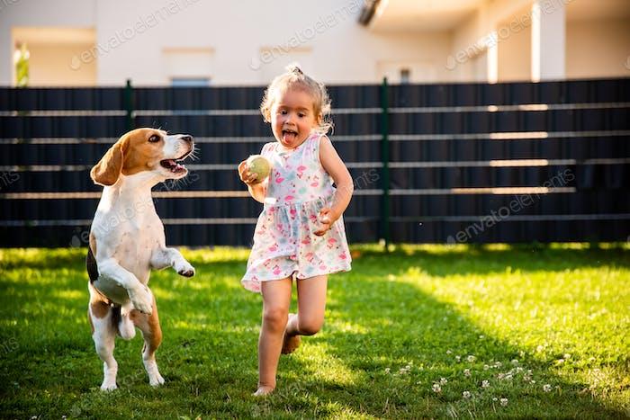 Baby Mädchen läuft mit Beagle Hund im Garten am Sommertag. Haustier mit Kindern Konzept