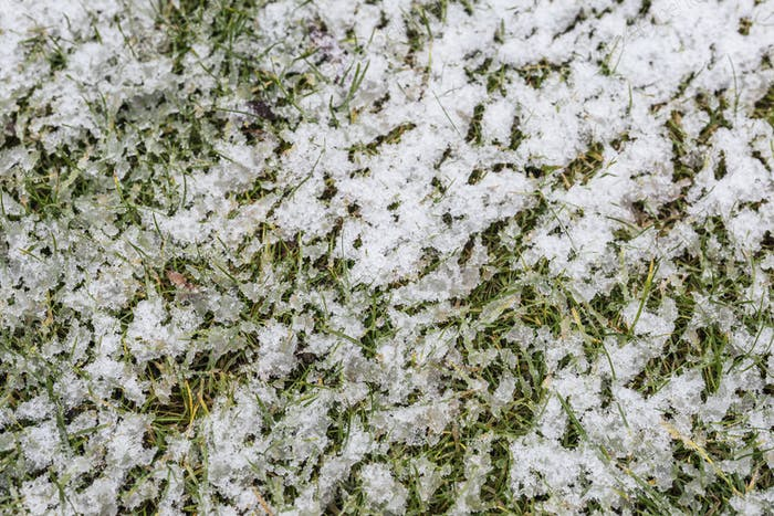 Snow covered green lawn background