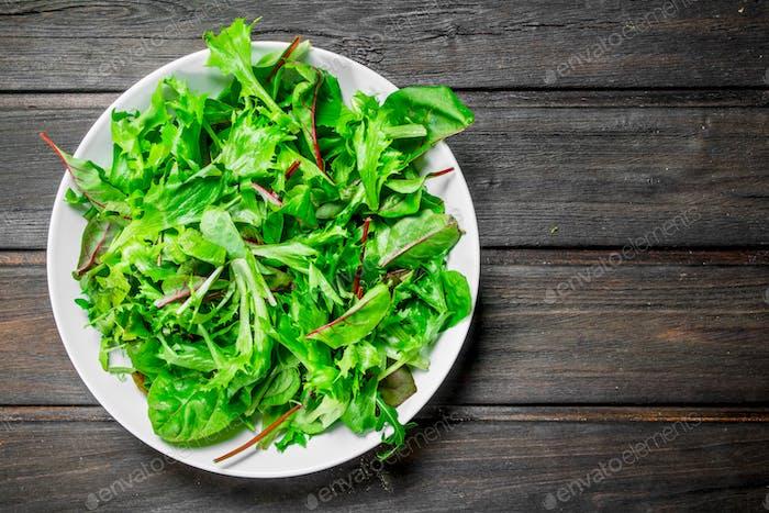 Gesunder Salat. Rucola-Salat in einer Schüssel.