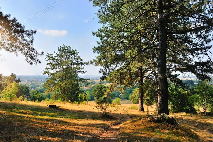 Beautiful autumn landscape with pine trees on a sunny day