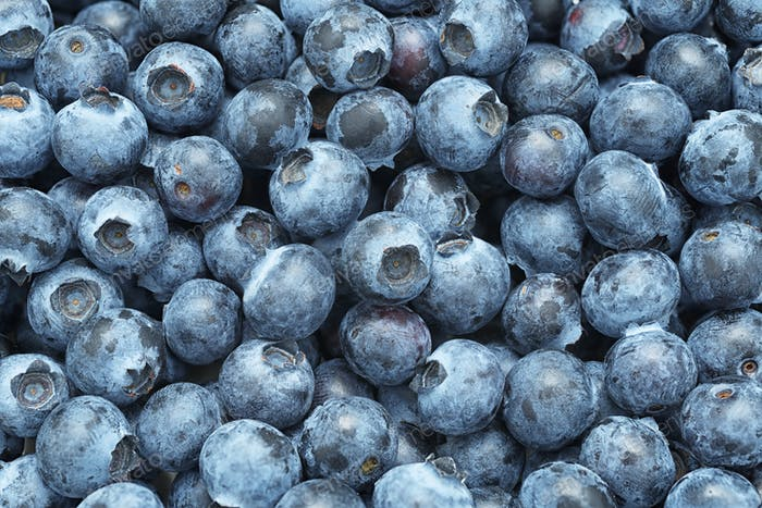 Lot of ripe blueberry background