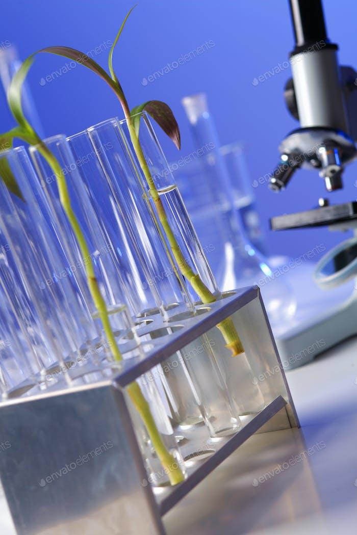 Plantas verdes en laboratorio de biología
