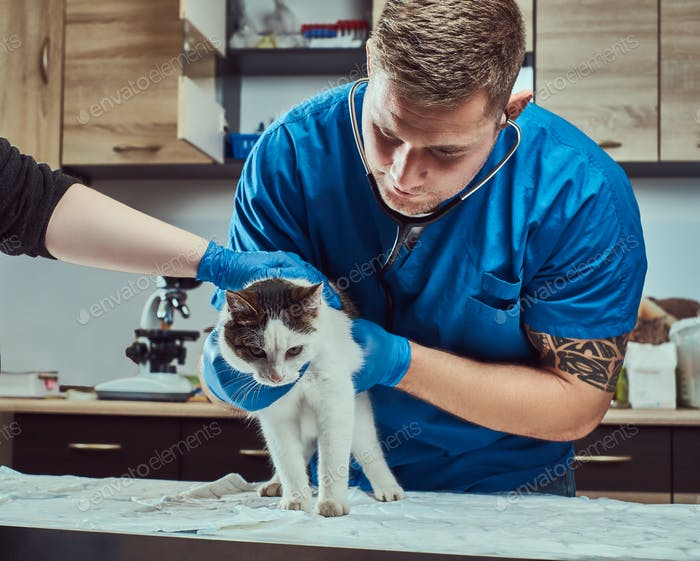 Veterinary doctor examining a sick cat with stethoscope in a vet clinic