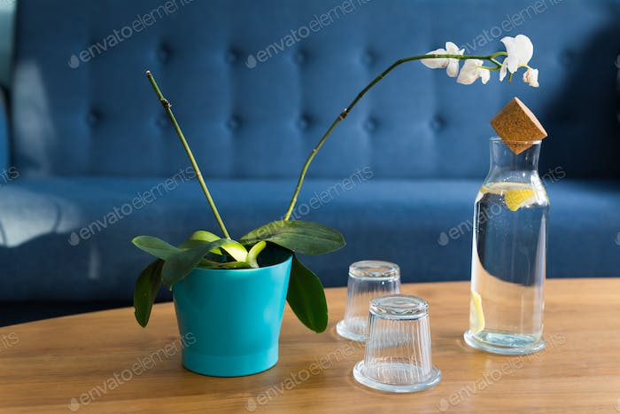 Houseplants concept - Beautiful white orchid on wooden table.