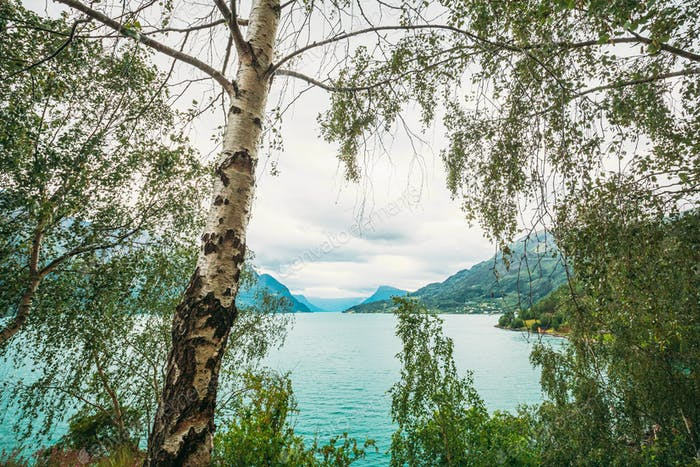 Bargarden Nature Reserve, Norway. Beautiful Fjord, Lake In Summer Day. Norwegian Nature. Birch Tree