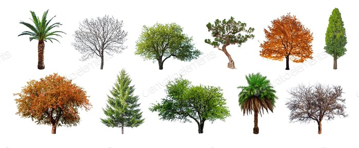 Set of green trees isolated on white background