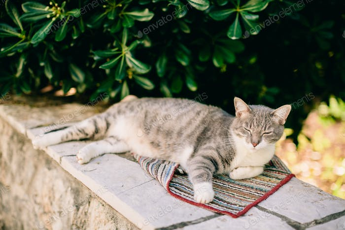 beautiful cat laying in the shadow