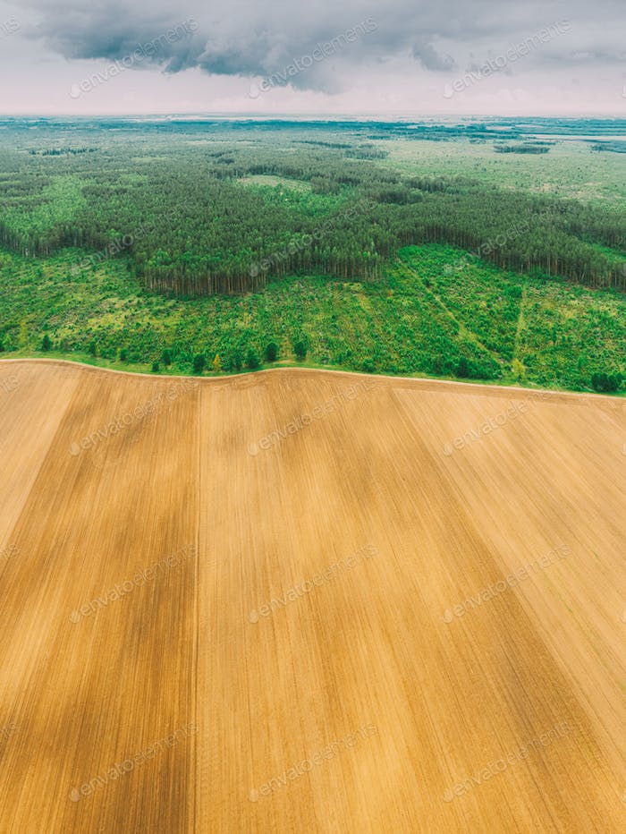 Aerial View Of Field And Deforestation Area Zone Landscape. Top View Of Field And Green Pine Forest