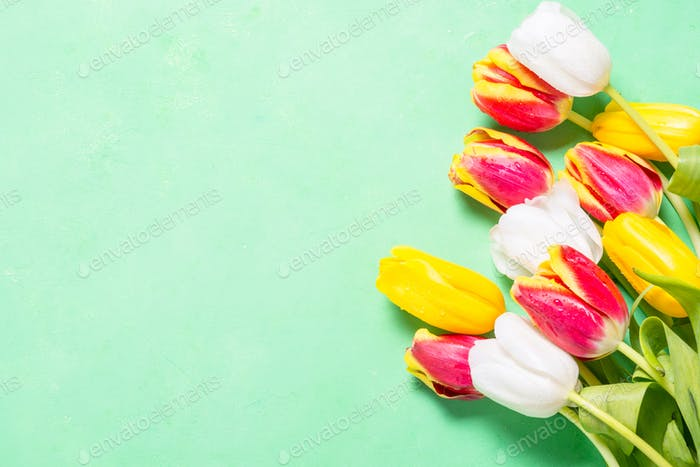 Flatlay flower background. Tulips on green.