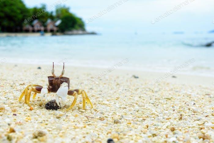 Nahaufnahme von Windkrabbe auf dem Sand
