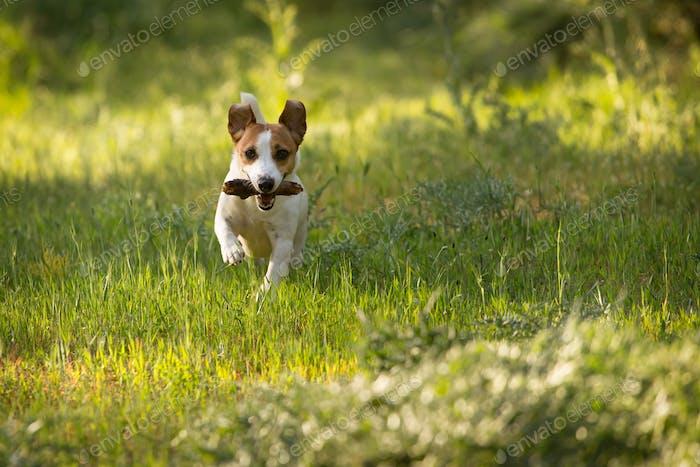 Dog fetching stick