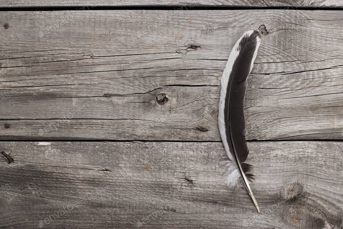 Black And White Feather On Wooden Table Background