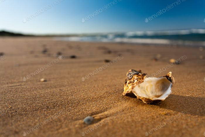 Shell on Beach at Sunset