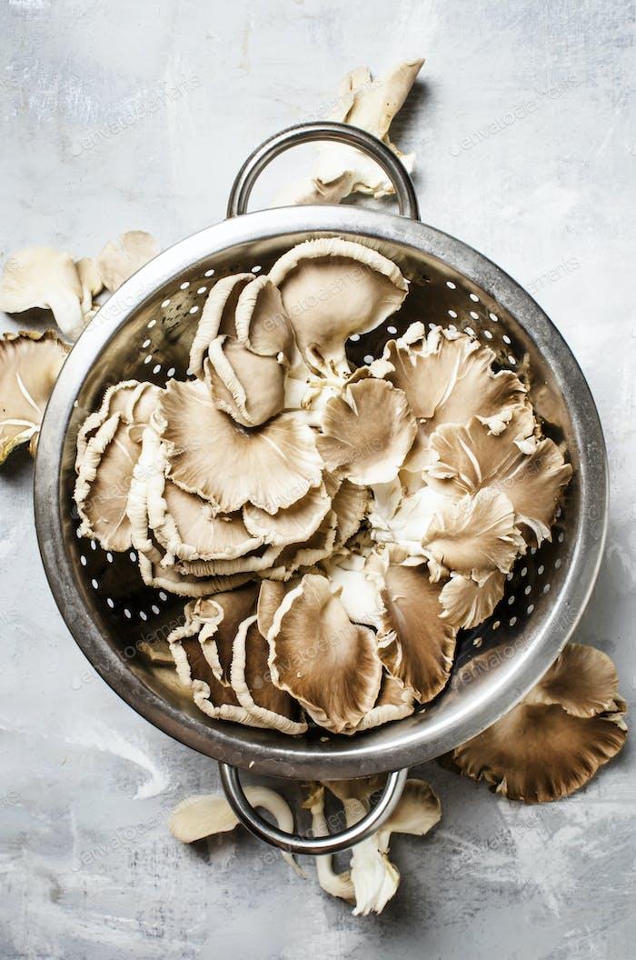 Frische Austernpilze