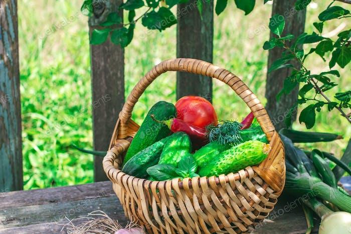 Basket of vegetables outdoors