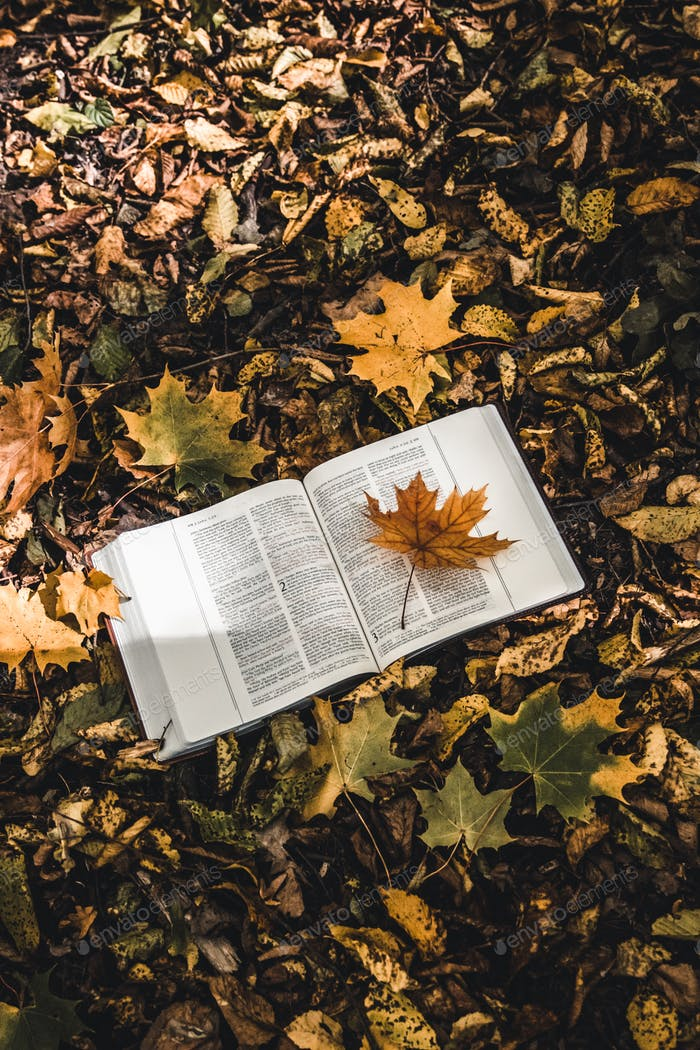 Holy Bible on top of fallen autumn leaves