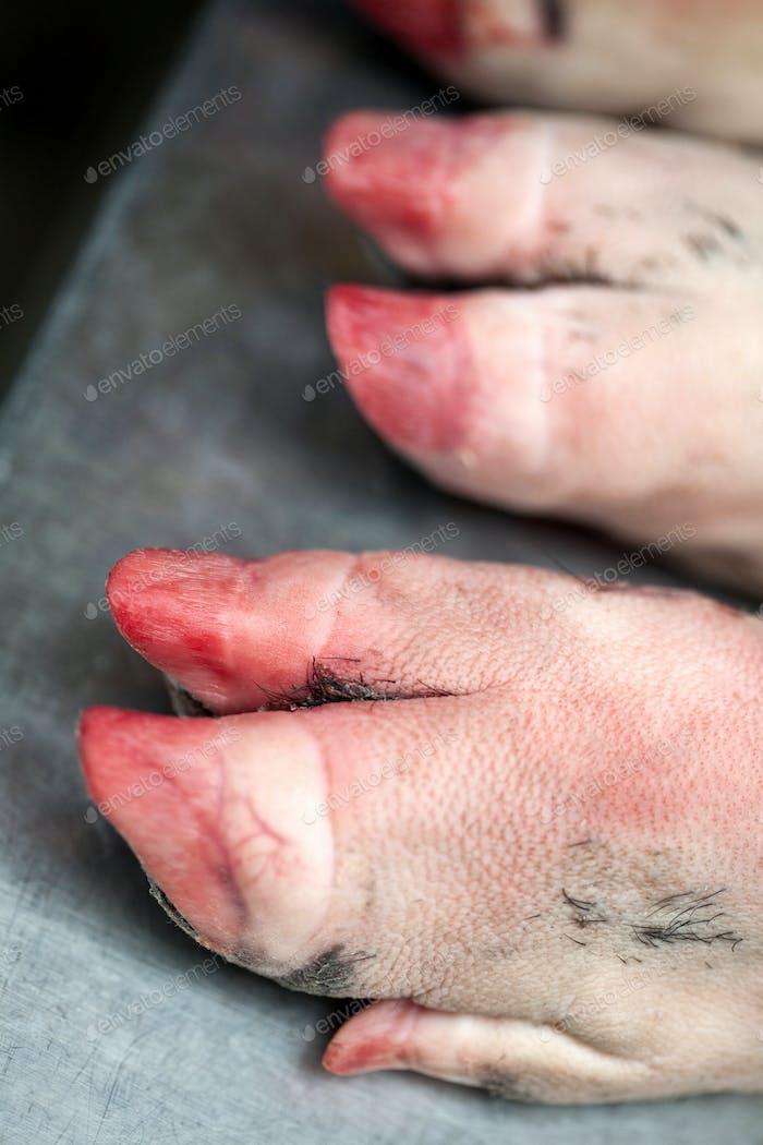 Pig feet