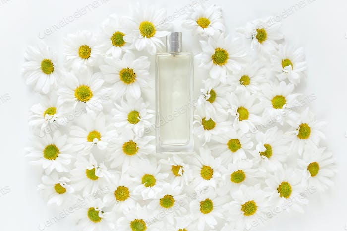 Glass jar with lot of daisy flowers buds on white background