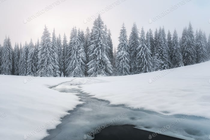 Fantastic winter landscape with snowy trees