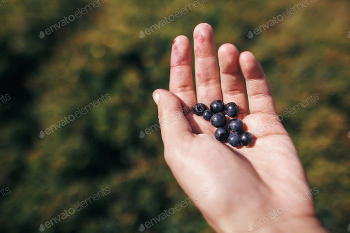 Hand palm holding blueberries on background of sunny mountains and sky
