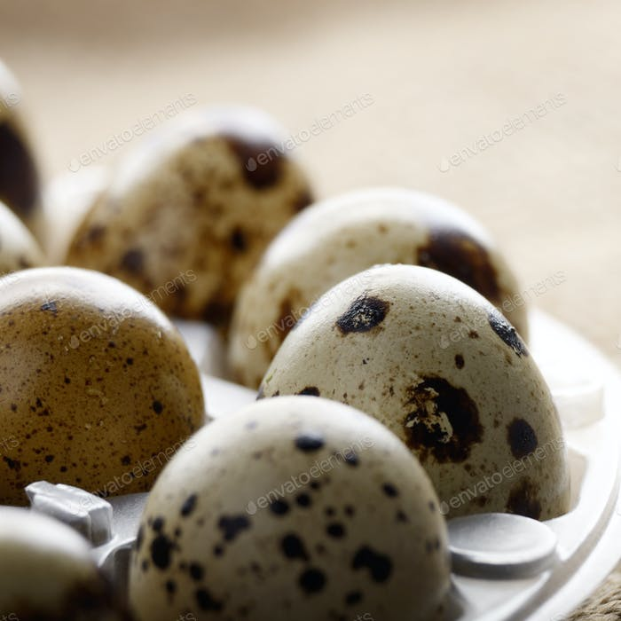 Fresh organic quail eggs in plastic tray on hemp fabric burlap.