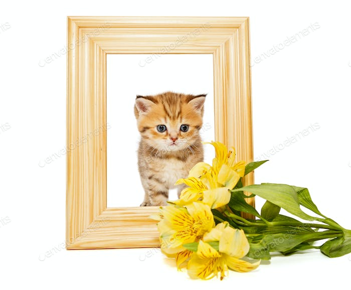 Little kitty in a wooden frame