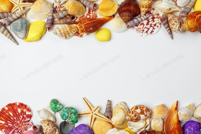 Composition of exotic seashells