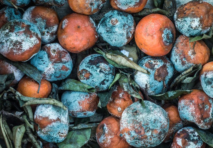 Rotting Fruit Texture Background