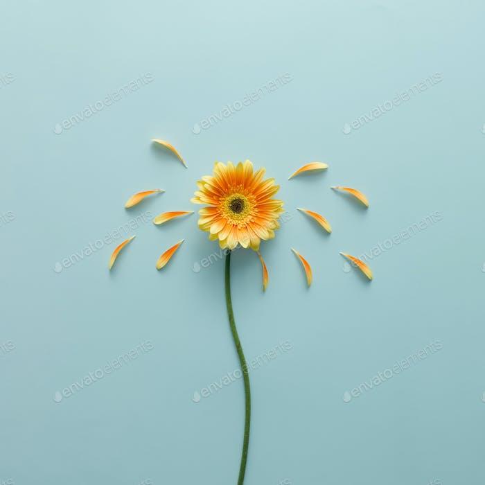 Flor amarilla sobre fondo azul brillante con pétalos. Concepto de emoción. Colada plana de verano.