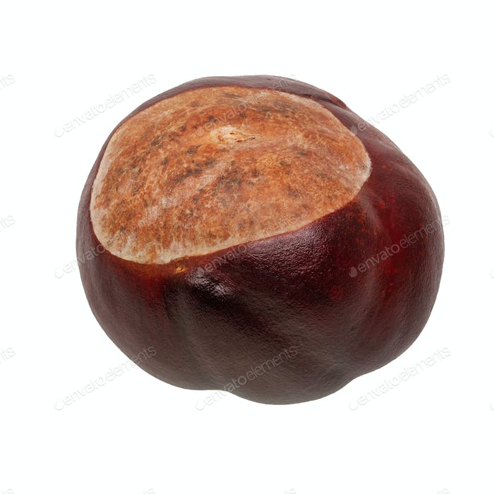 Brown chestnut on a white background