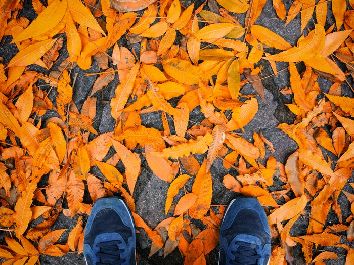 Blue shoes with yellow fallen leaves.