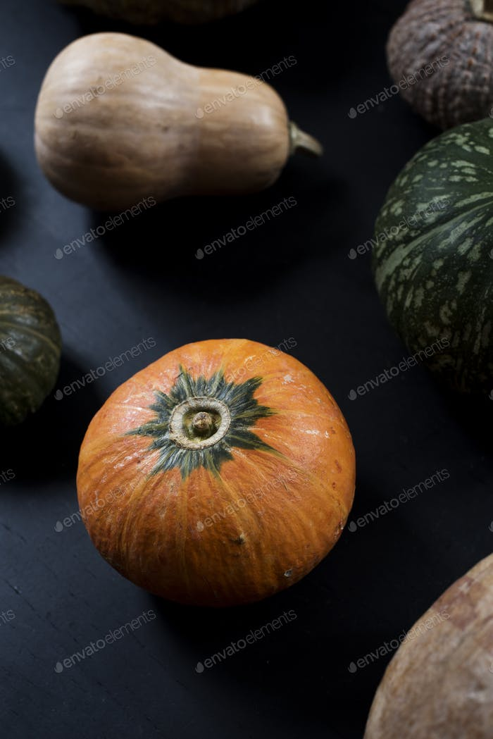 Aerial view of diverse fresh pumpkins
