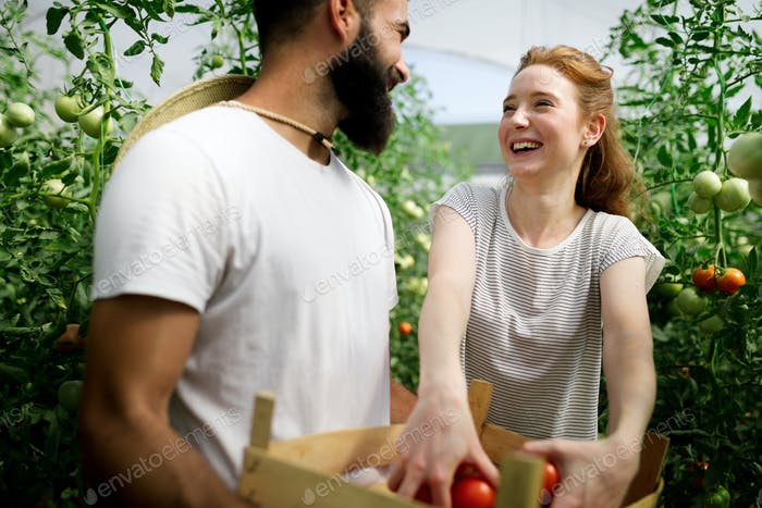 Two people working in a greenhouse