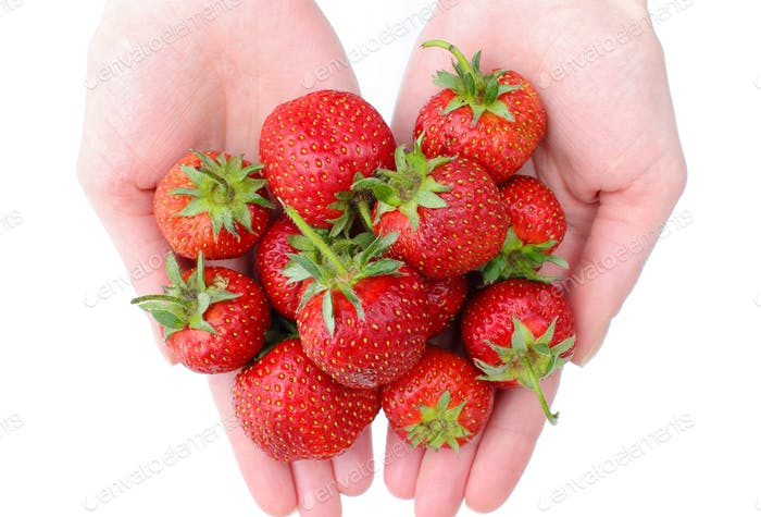 Fresh ripe strawberries in hand, concept of healthy nutrition