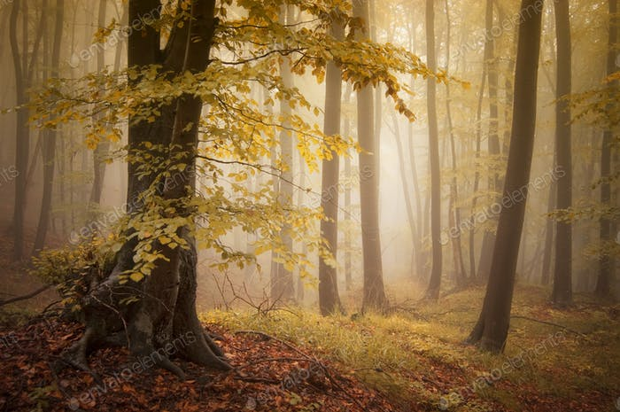 Enchanted autumn forest with fog