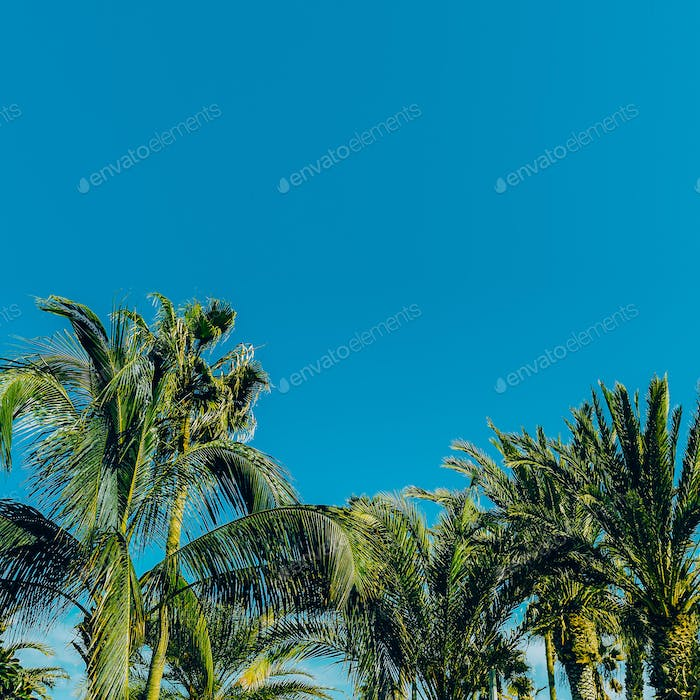 Palms in the blue sky. Minimal travel location