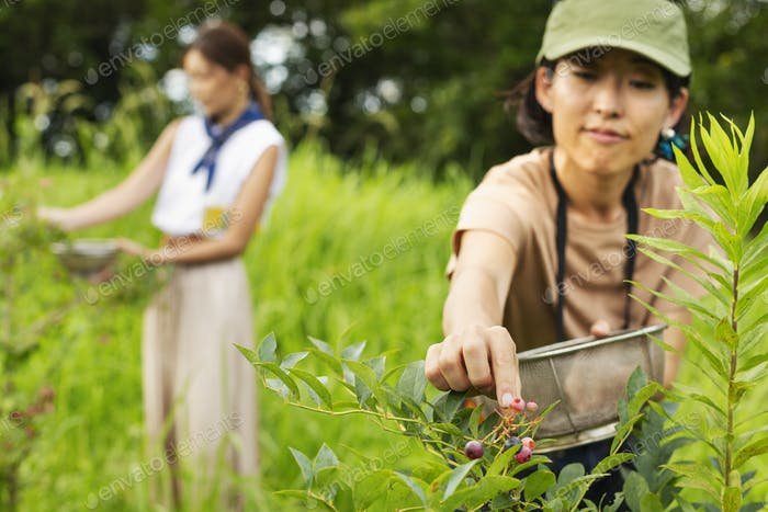 Two Japanese women picking berries in a field.