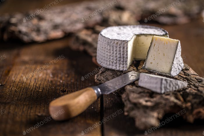 Cheese of camembert
