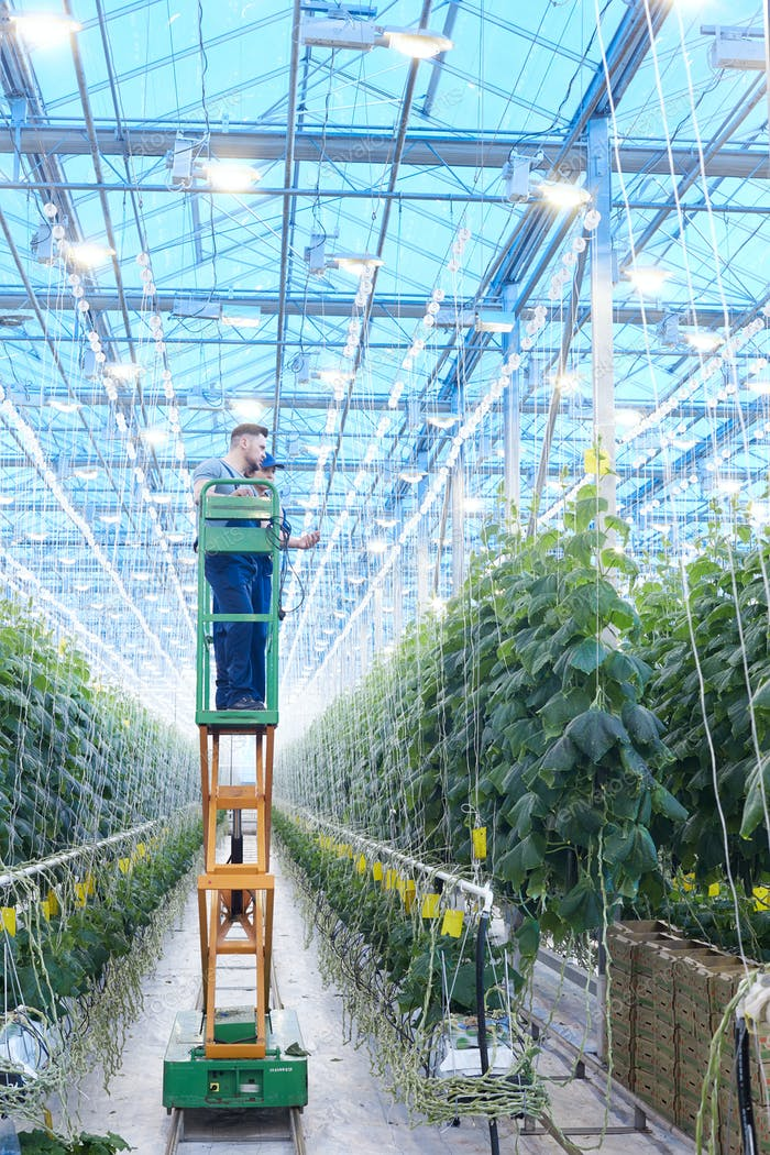 Workers Inspecting Plants in Greenhouse