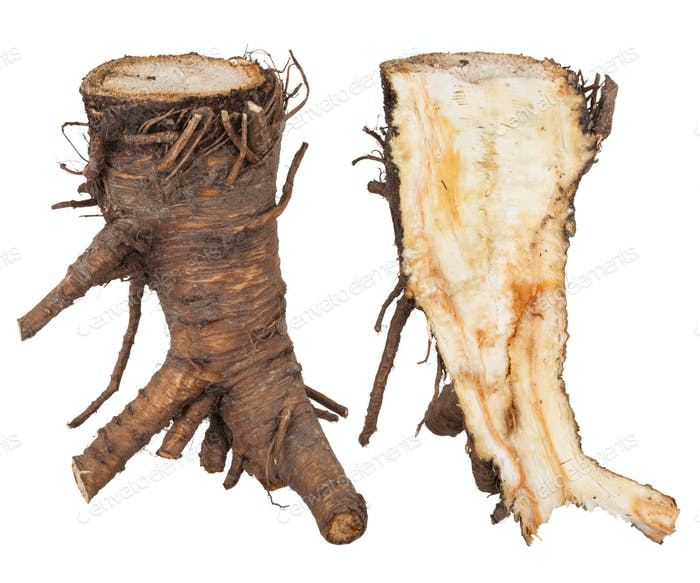 Heilpflanze: Angelika-Wurzel