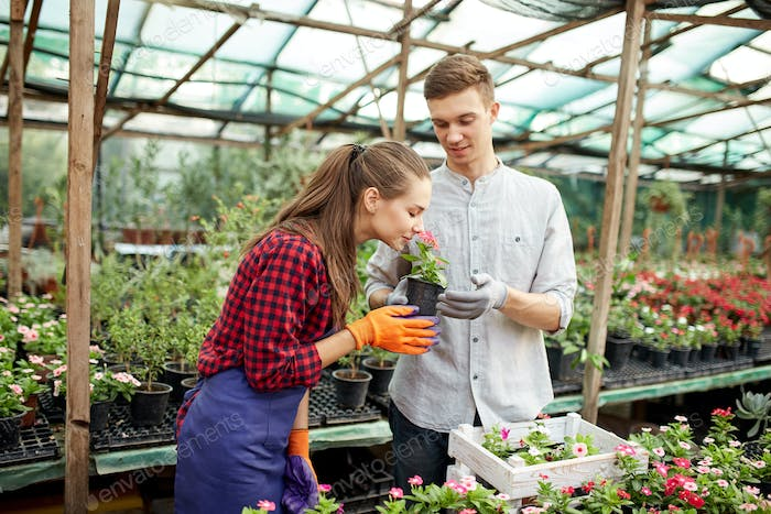 Guy and girl gardeners choose pots with flower seedlings in greenhouse on a sunny day